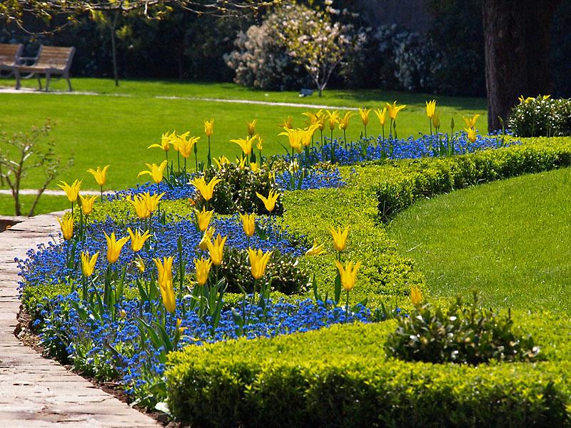 Ялта никитский ботанический сад фото