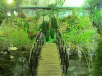 Великий Устюг Зимний сад